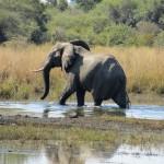 Elefant_MahangoNP