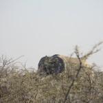 Elefant im Dickbusch