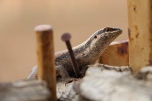 Gecko am Hochsitz