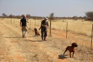 Raffael, Emanuel mit Hunden