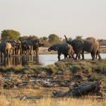 Elefanten am Goas-Wasserloch