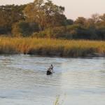 Einheimischer auf Okawango
