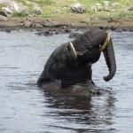 Elefant am Nuamses Wasserloch