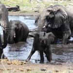 Elefantenbad am Nuamses Wasserloch