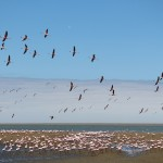 Flamingomassen - Lagoon in Walvis Bay