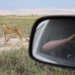 Nina und Löwin