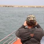 Robbenkolonie von Walvis Bay