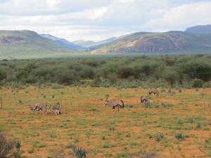 Oryxe vor Paresisbergen