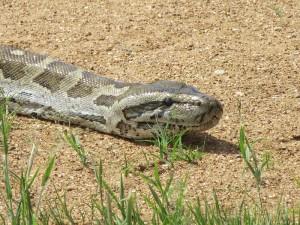 Python_