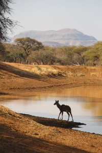 Kudu am Damm_