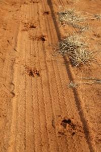Oryx_Tracks nach Regenfall